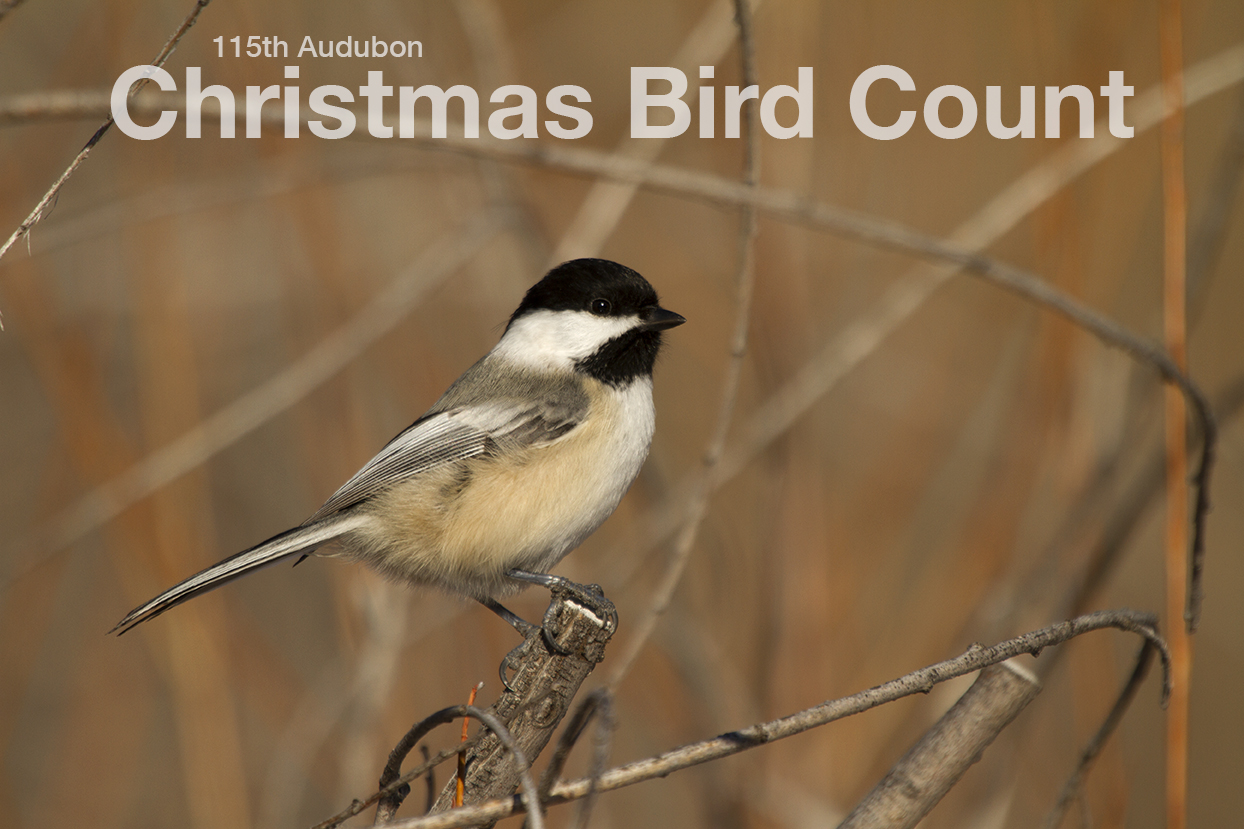 Christmas Bird Count 2014