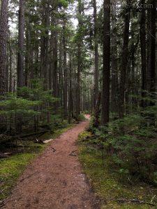 McDonald Creek Trail